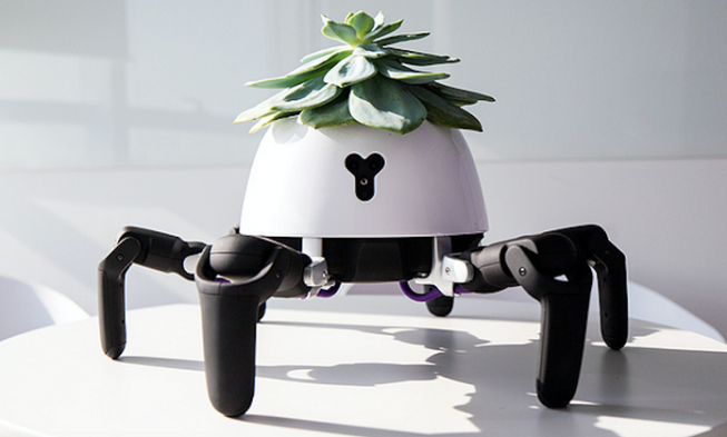 This Robot Planter Follows The Sunlight & Throws Tantrums If You Don't Water It